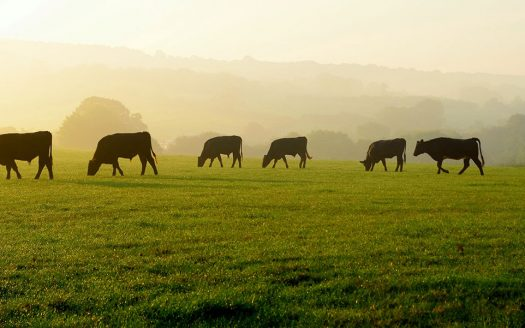 Holistic Grazing for Ranch Livestock