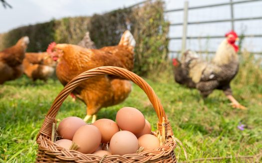 Ways to Make an Extra Profit on Your Farm