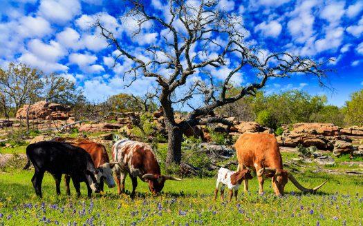 Coronavirus' Effects on Livestock