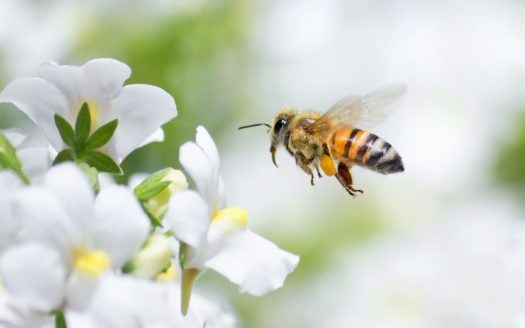 Attracting Bees to Your Land