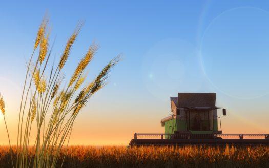 Preparing for a Better Wheat Harvest