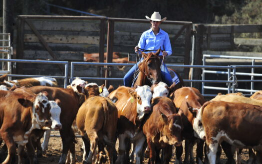 How to Start a Cattle Ranch