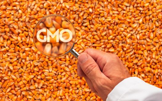 From Farm to Table: Are GMO's Safe?