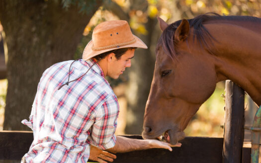 What to Look For When Hiring a Ranch Hand