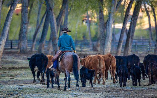 Temple Grandin – The Pioneer in Ranch Land Design