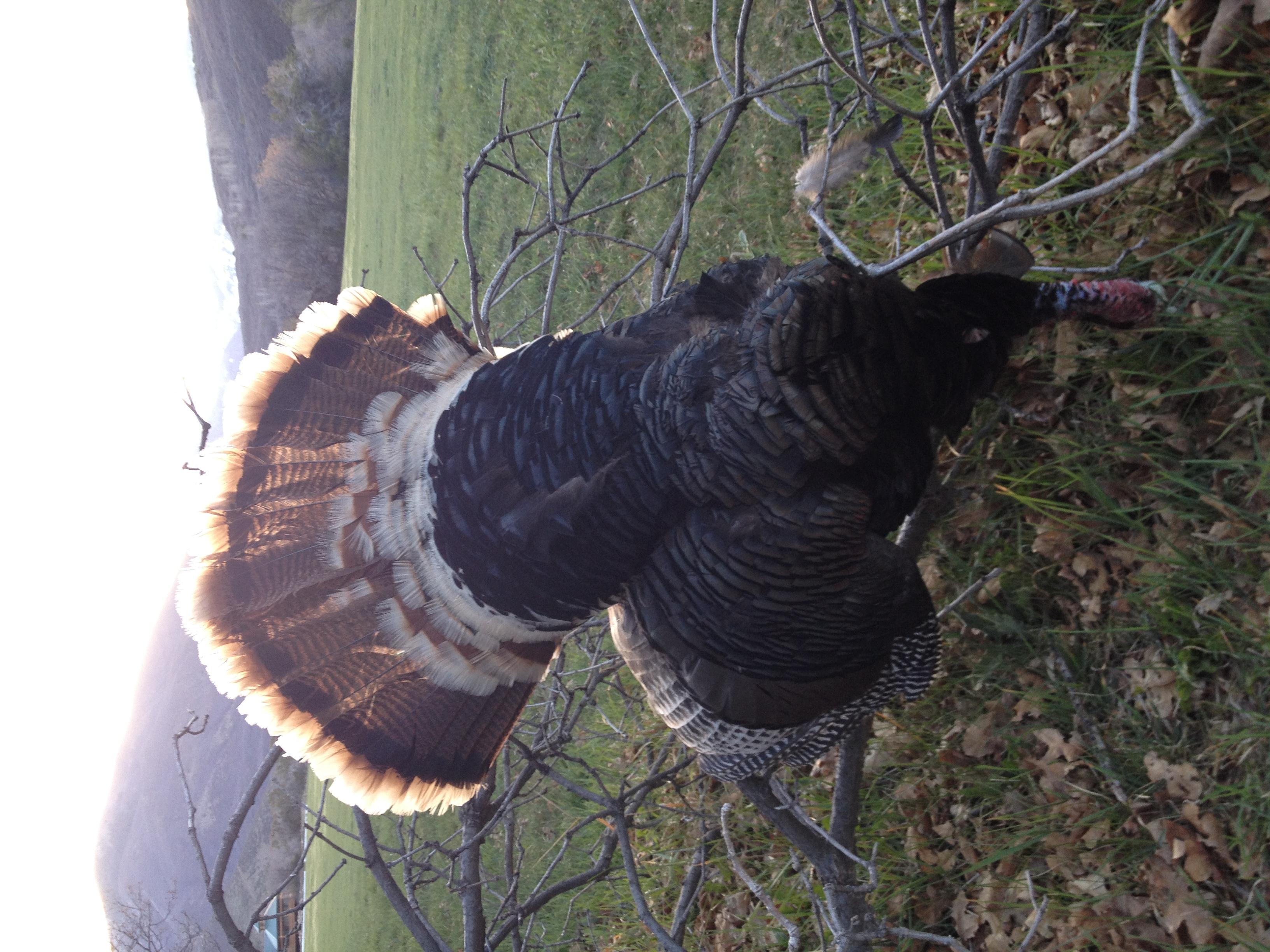 Colorado Turkey Hunting--A Landowner's Spring Bonus