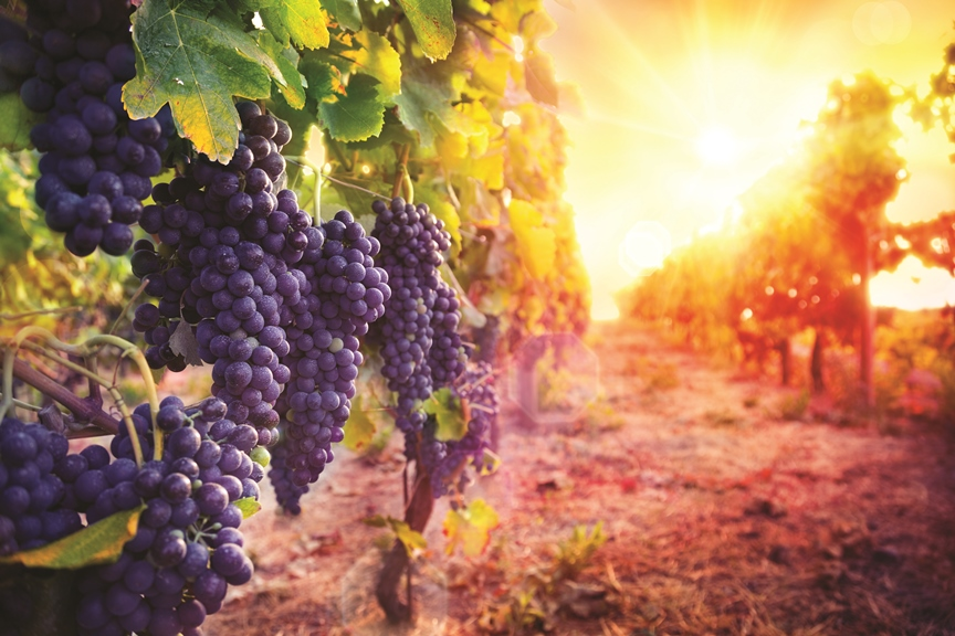 Winery and Vineyard Sales Predicted to Continue Momentum in 2017