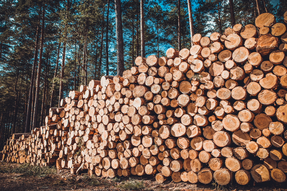 Understanding Timberland Value