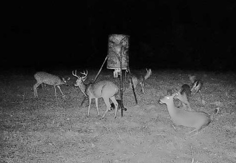 Food Plots vs Feeders: Which is Better on My Hunting Land?