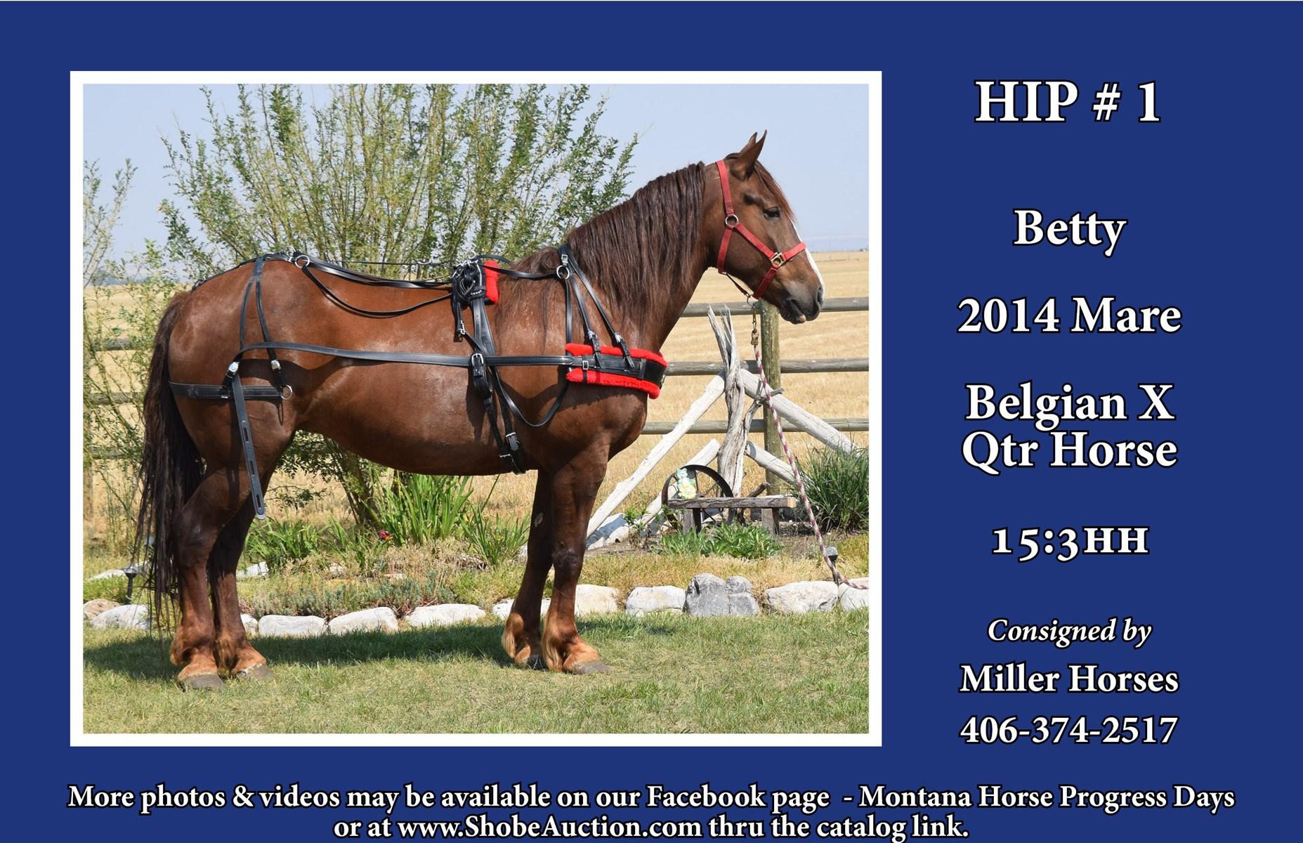 Horses, Cattle, Livestock