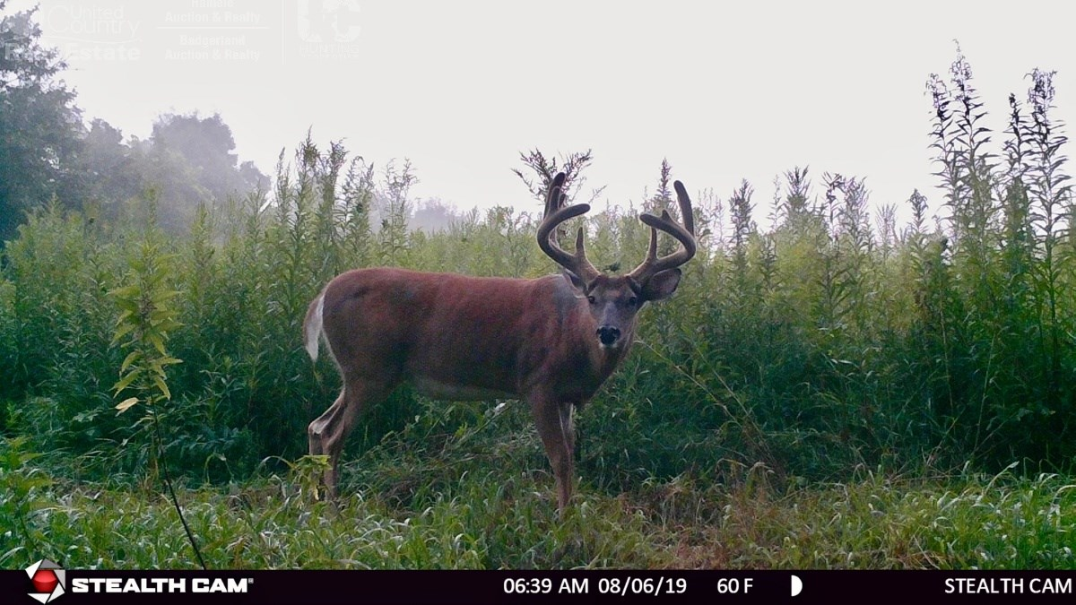 Impeccable Hunting Land For Sale in Richland County, WI