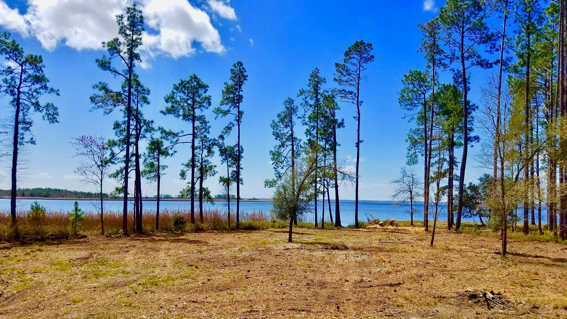 Riverfront property for sale in New Bern, NC