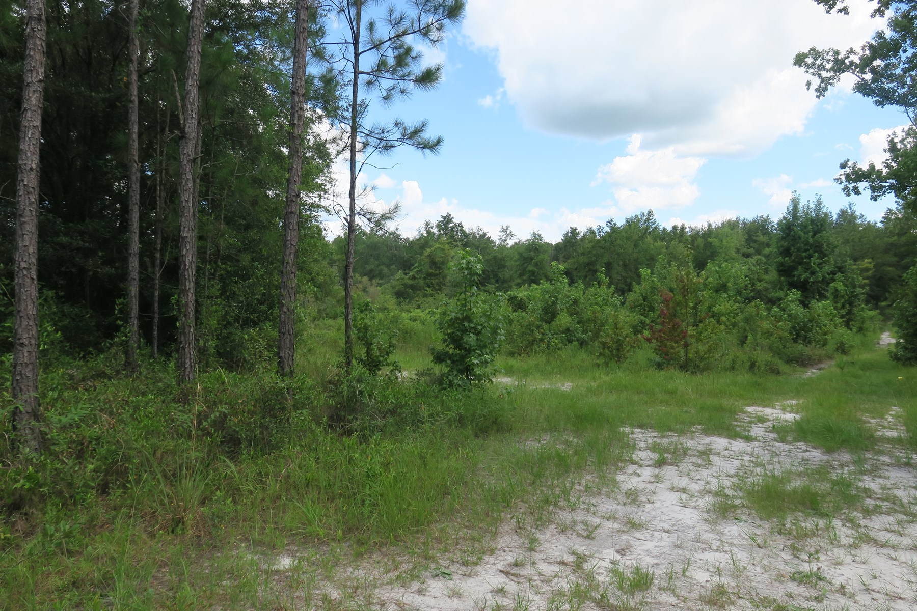 5 ACRES FOR SALE!
