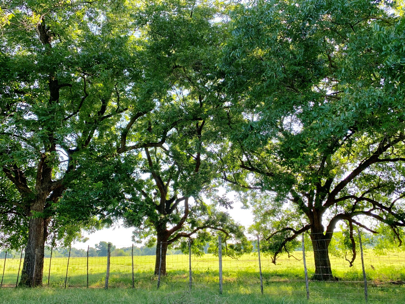 working cattle ranch for sale frankston tx