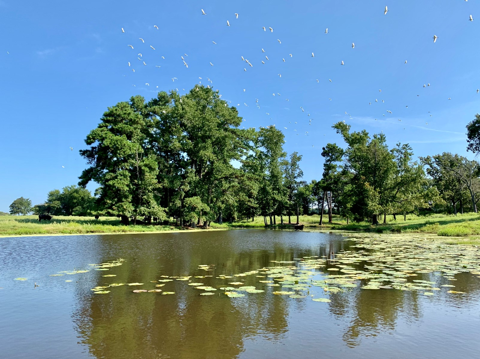 pond on hunting property for sale in texas