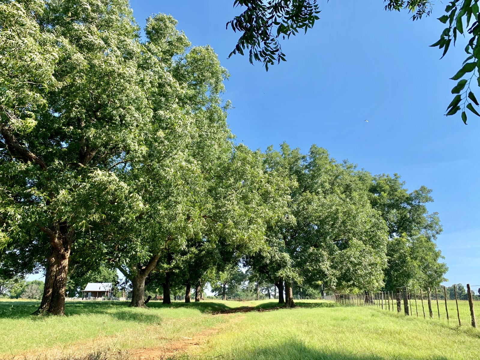 hunting land on east texas ranch for sale