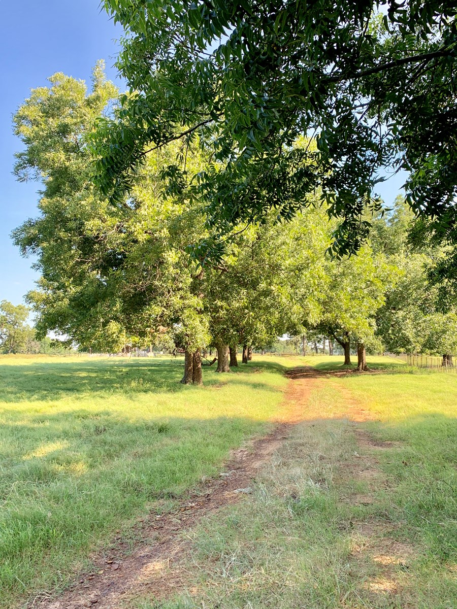 hunt east texas land for sale