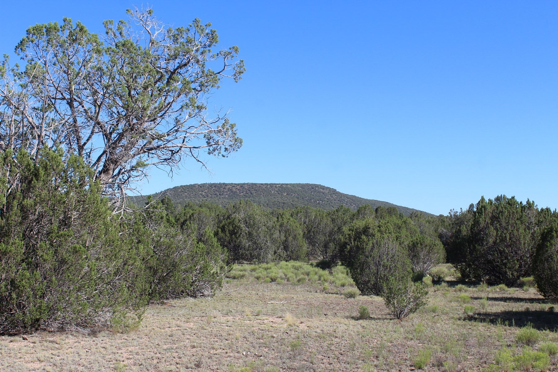 Arizona Mountain Property For Sale in Seligman