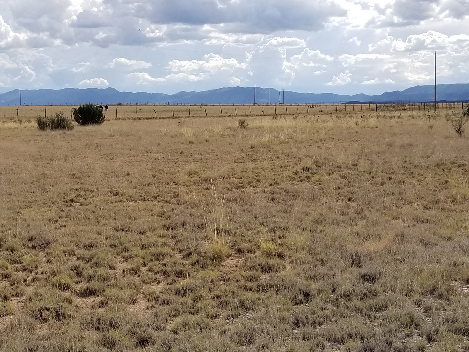 Estancia Valley NM Acreage For Sale Country Lifestyle Rural