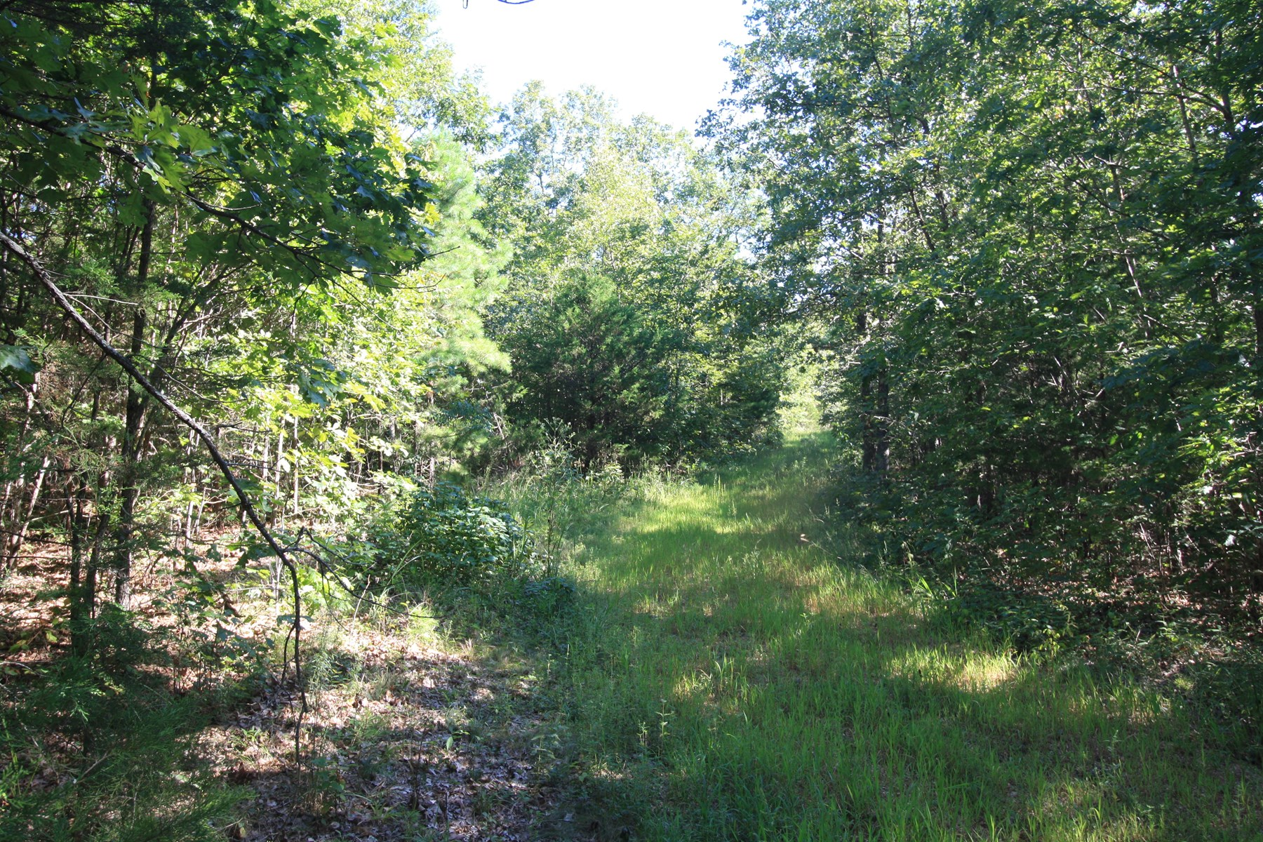Wayne County Missouri Hunting Land for sale 240 acres