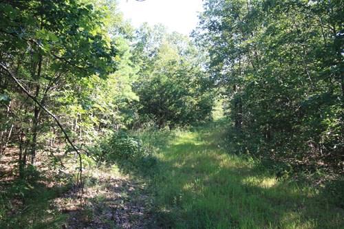 Wayne County Missouri Hunting Land for sale 240 acres