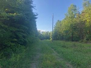 WILDER, TN/HUNTING LAND/MARKETABLE TIMBER/FENTRESS CO/RURAL