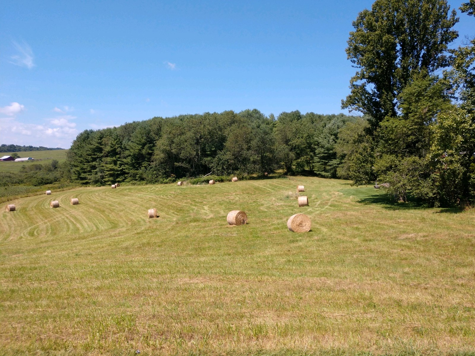 Pasture Land for Sale in Floyd VA at Auction