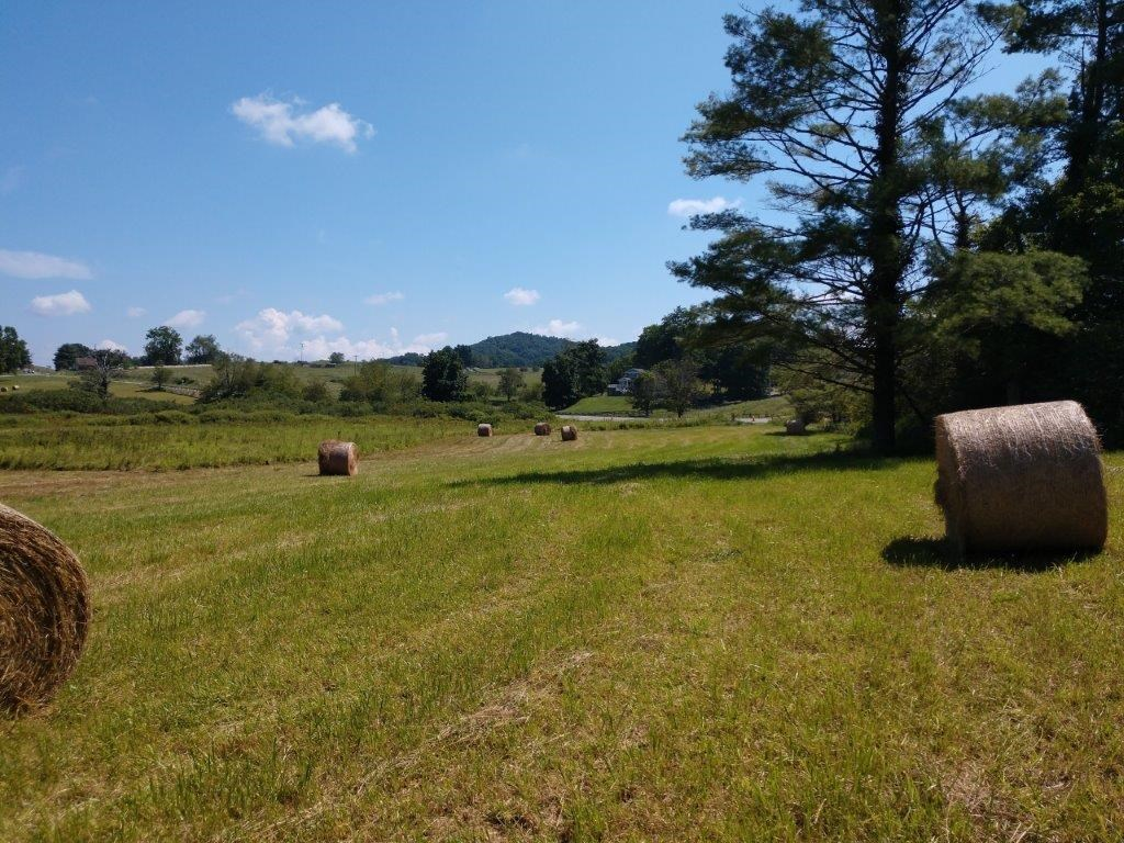 Woods and Pasture Land for Sale at Auction in Floyd VA