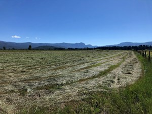 GREAT FARM FOR SALE WITH IRRIGATION AND EXSISTING HAY CROP