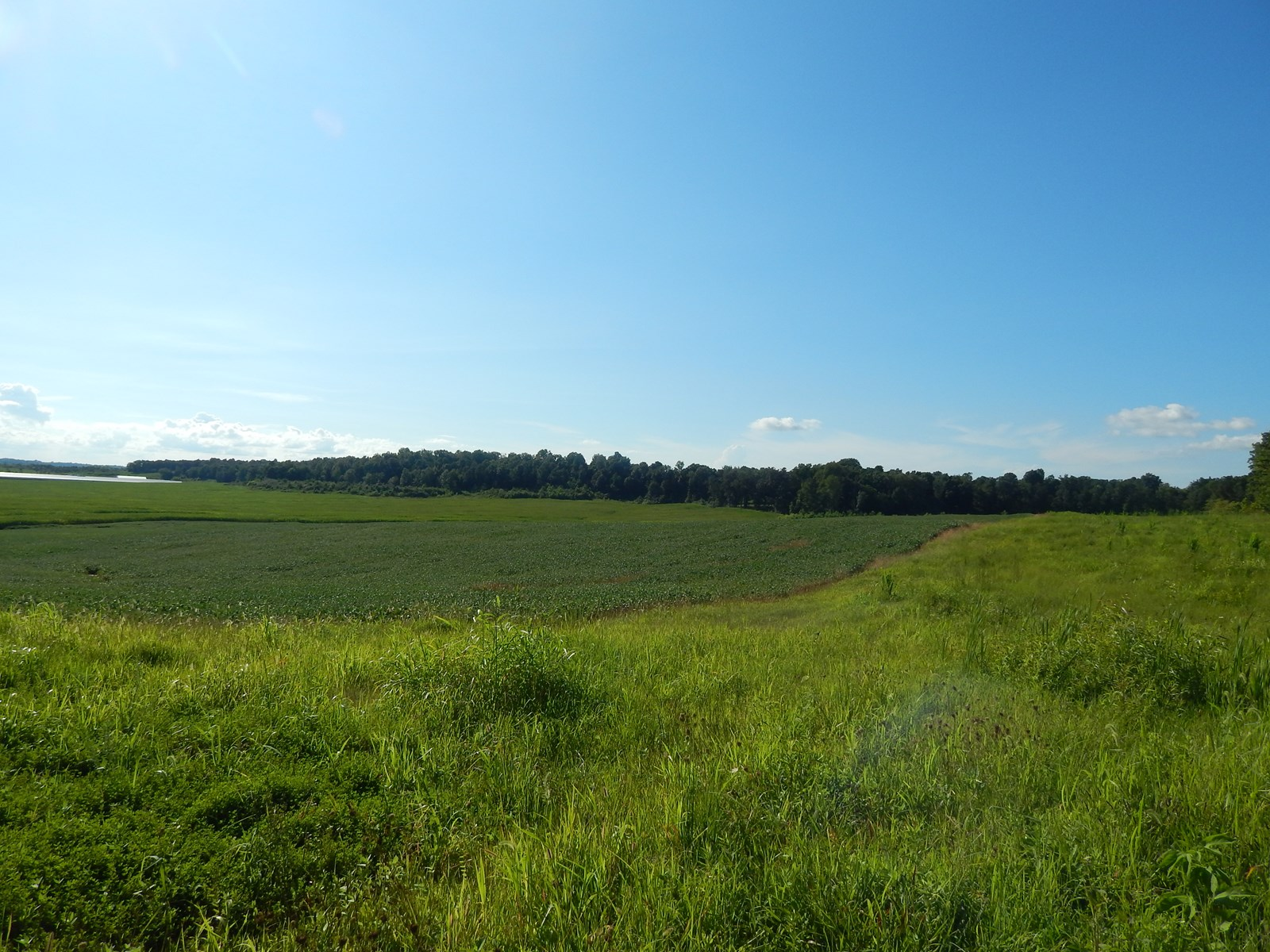 130 Acre Farm for Sale/Lease Purchase near Central City Ky.
