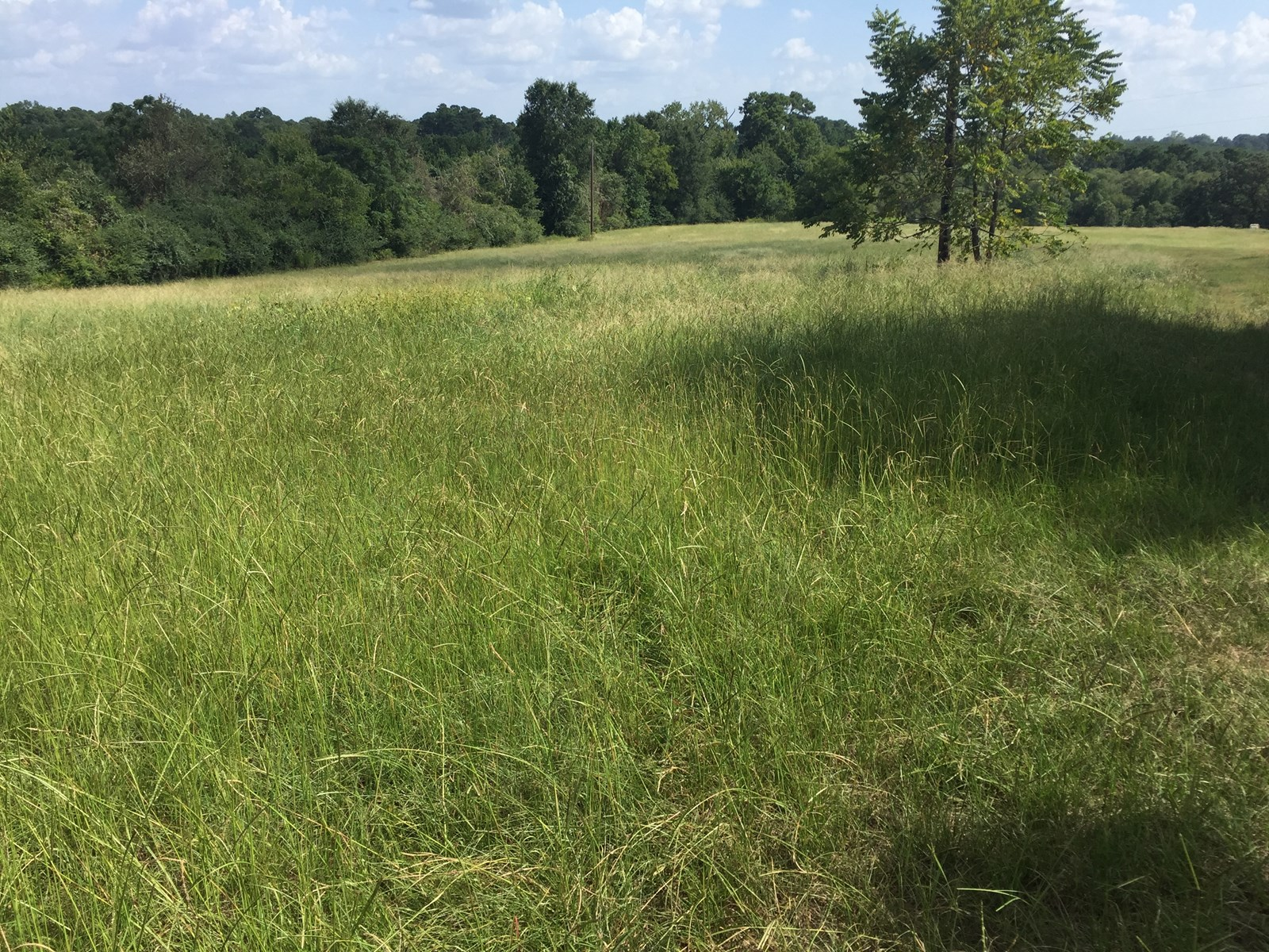 East Texas Hunting/Pasture/Recreation Real Estate For Sale
