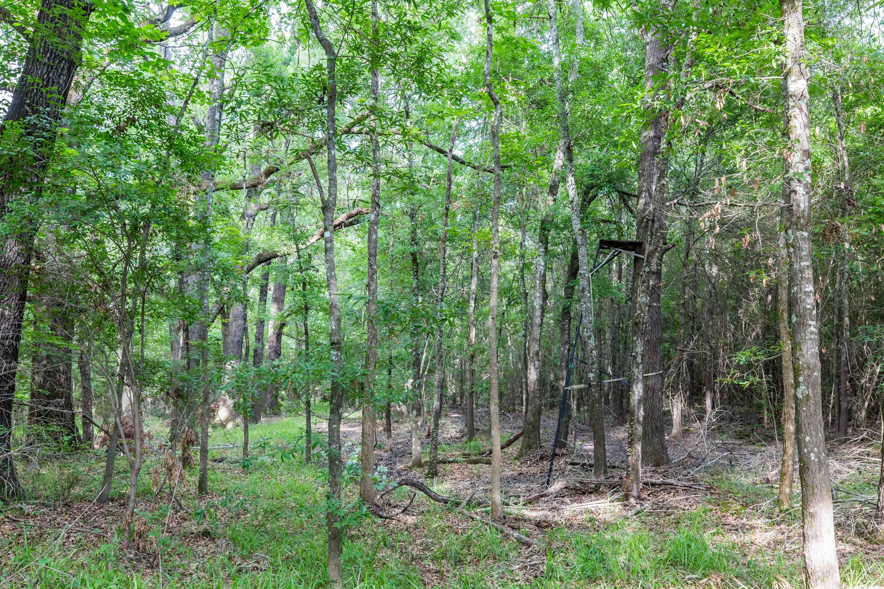 4.27 Acre Building Site near National Forest
