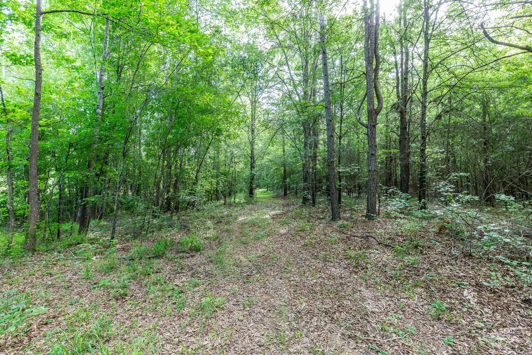 Wooded Acreage in Lookout Mtn. Estates, Mena, AR