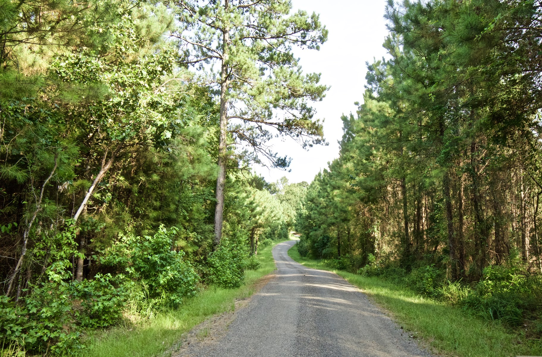 LOT FOR SALE - 4 ACRES - SAILES, LA