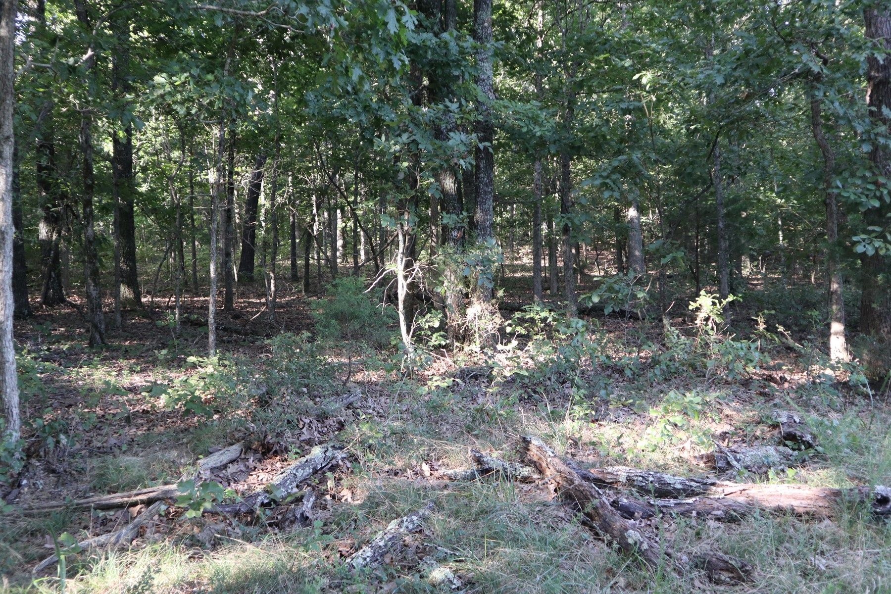 Ozarks Timberland and Hunting Property for Sale Viola AR