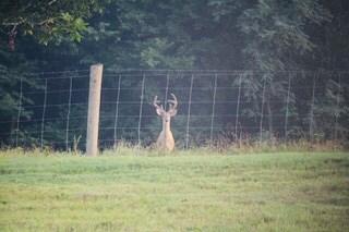 Deer Hunting in Tennesee