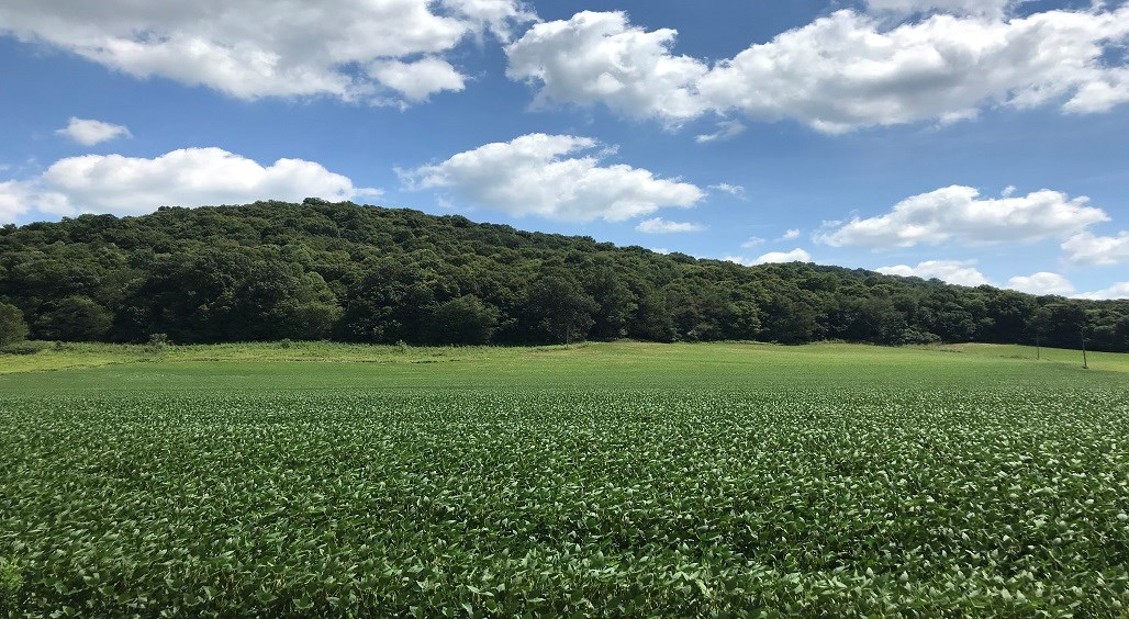 65 Acre Hunting and Row Crop farm in Adams County Ohio