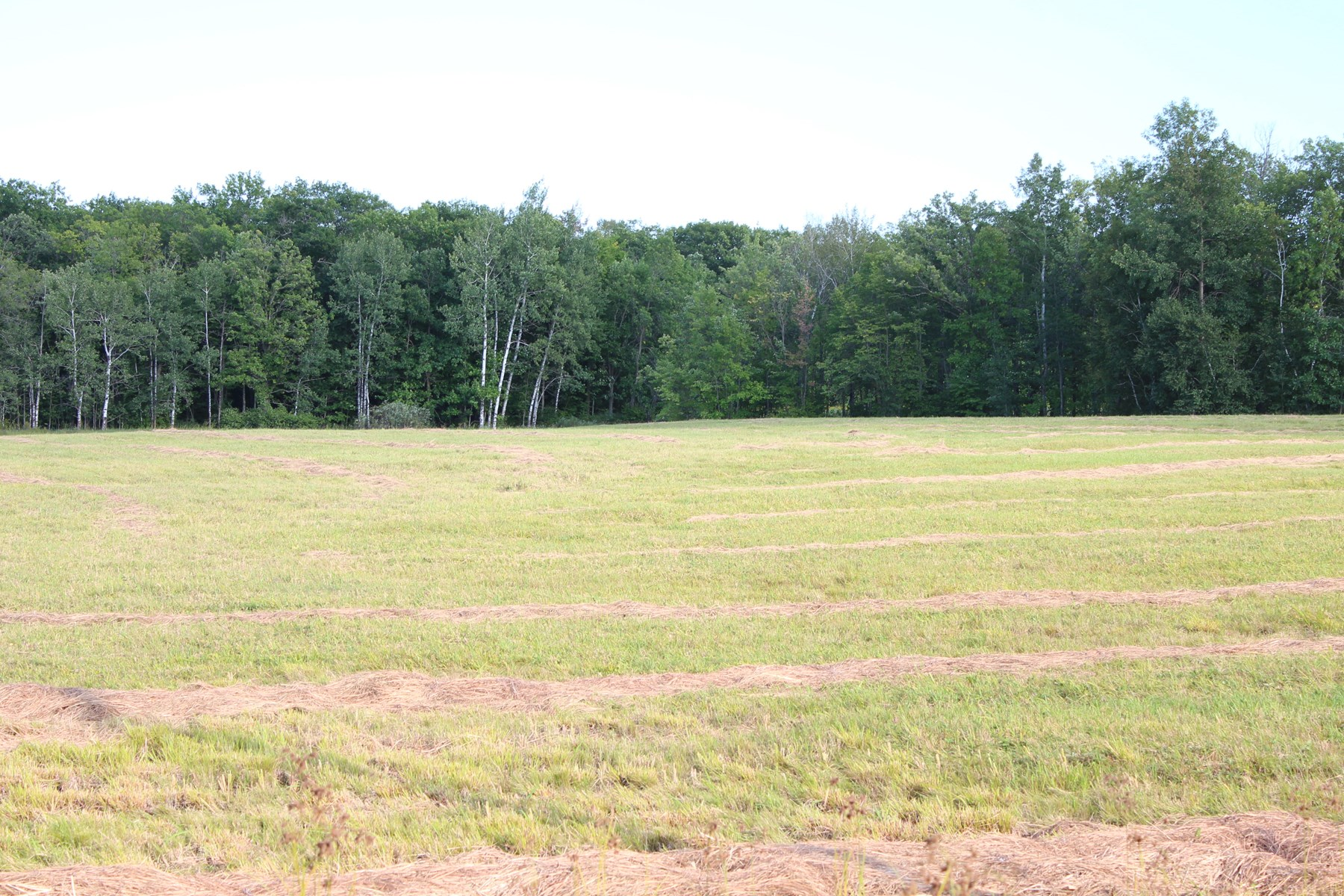 20 Acres Land For Sale Mille Lacs County