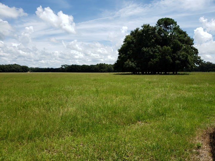 WILLISTON FLORIDA LAND FOR SALE