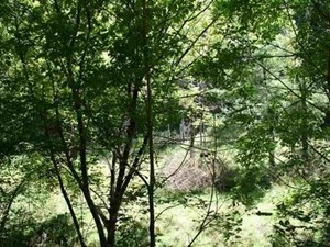 5.58 WOODED ACRES IN HIGHLAND COUNTY