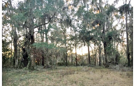 COUNTRY LIVING AT IT'S FINEST! 12.37 ACRES IN LAKE CITY, FL.