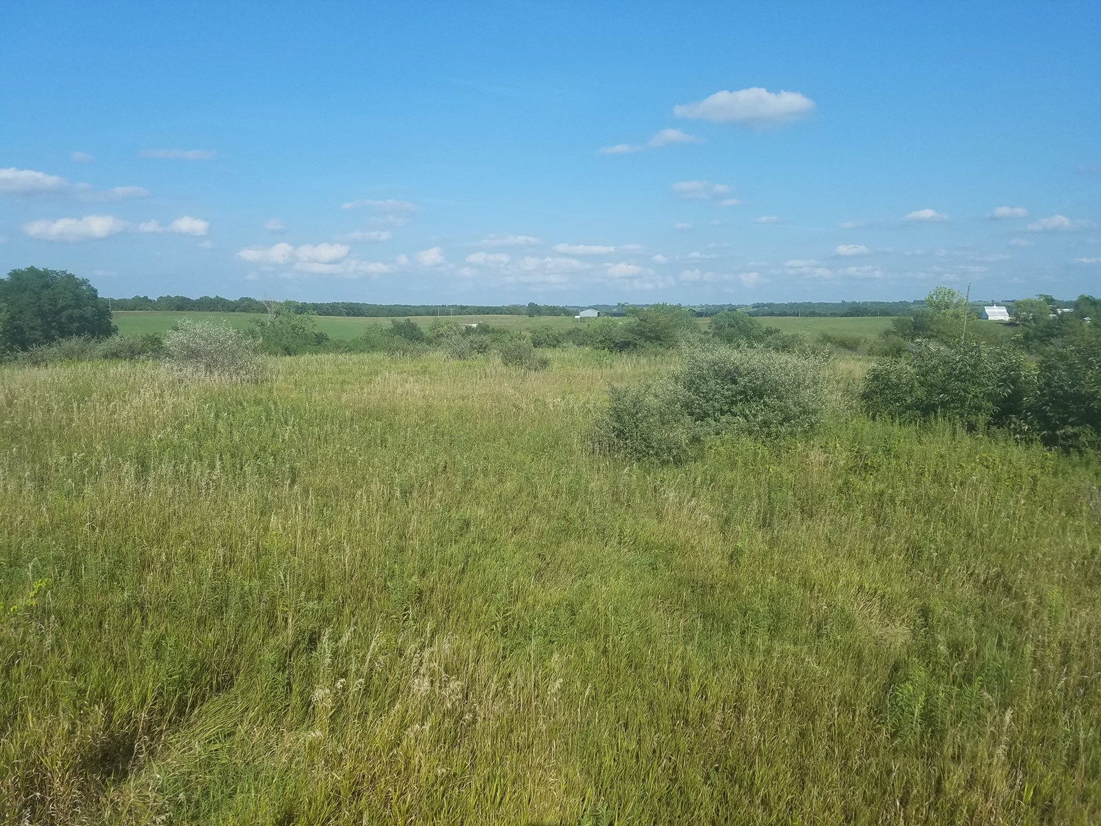 80 Acres of Hunting Land For Sale in Osgood. MO.