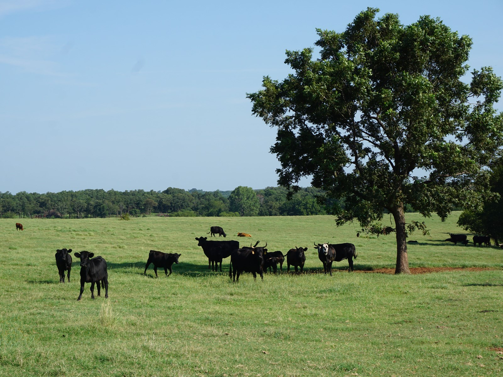 No Reserve 80 Acres +/- Land Auction, Carney, OK