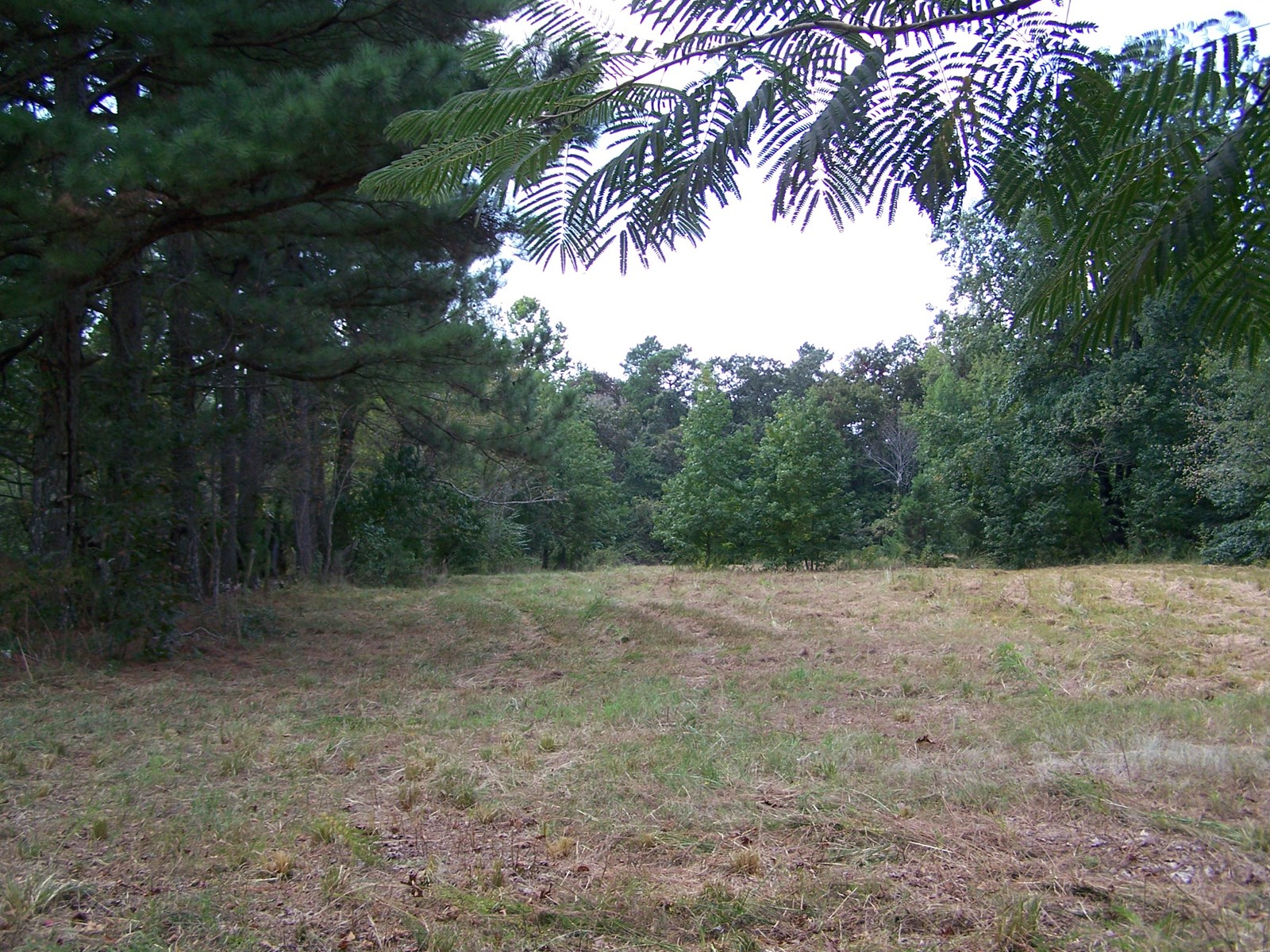 Ozark Mountain Hunting/Recreational Land For Sale