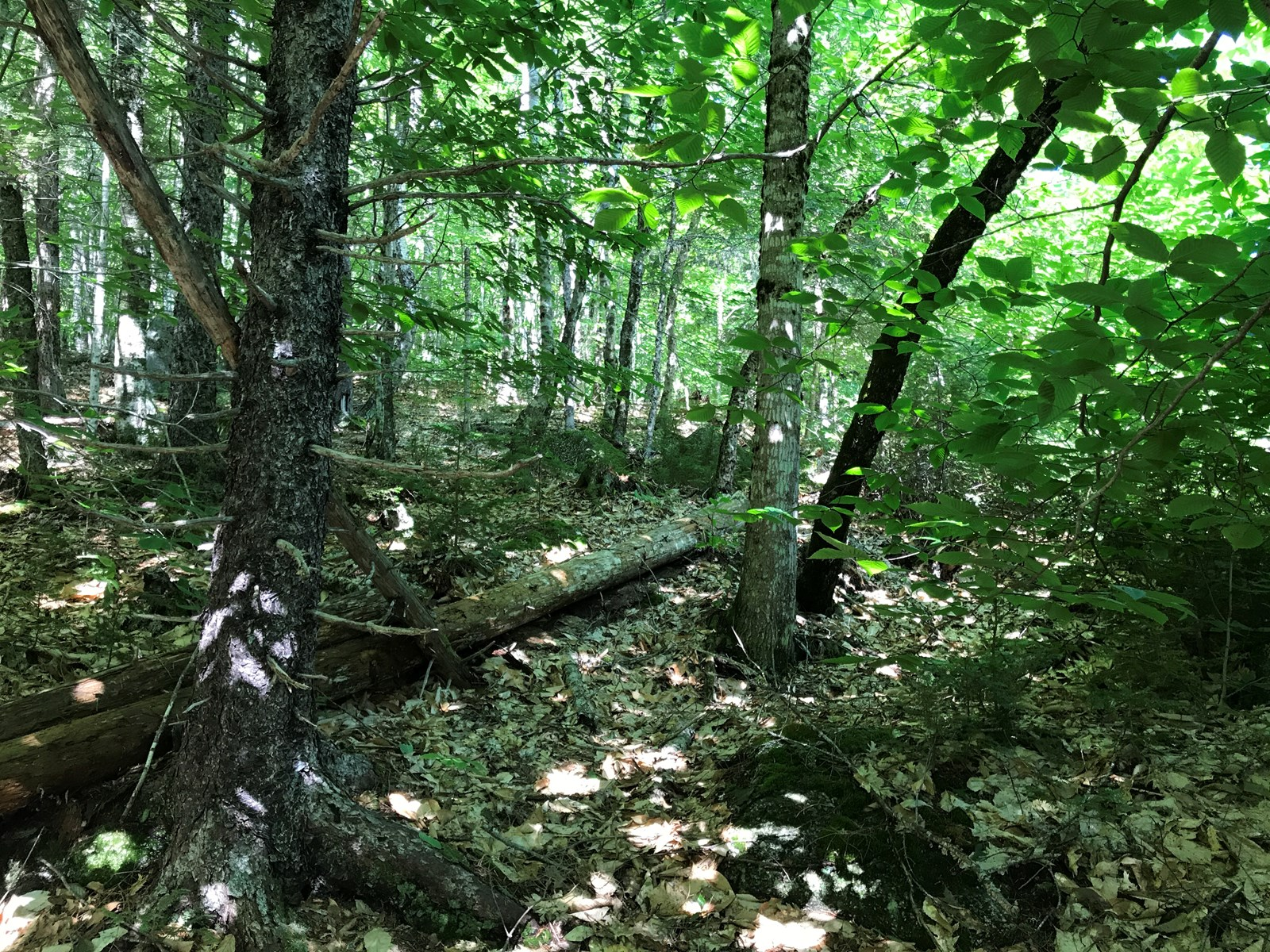 Recreational Timberland For Sale Maine Real Estate  Maine Real Estate
