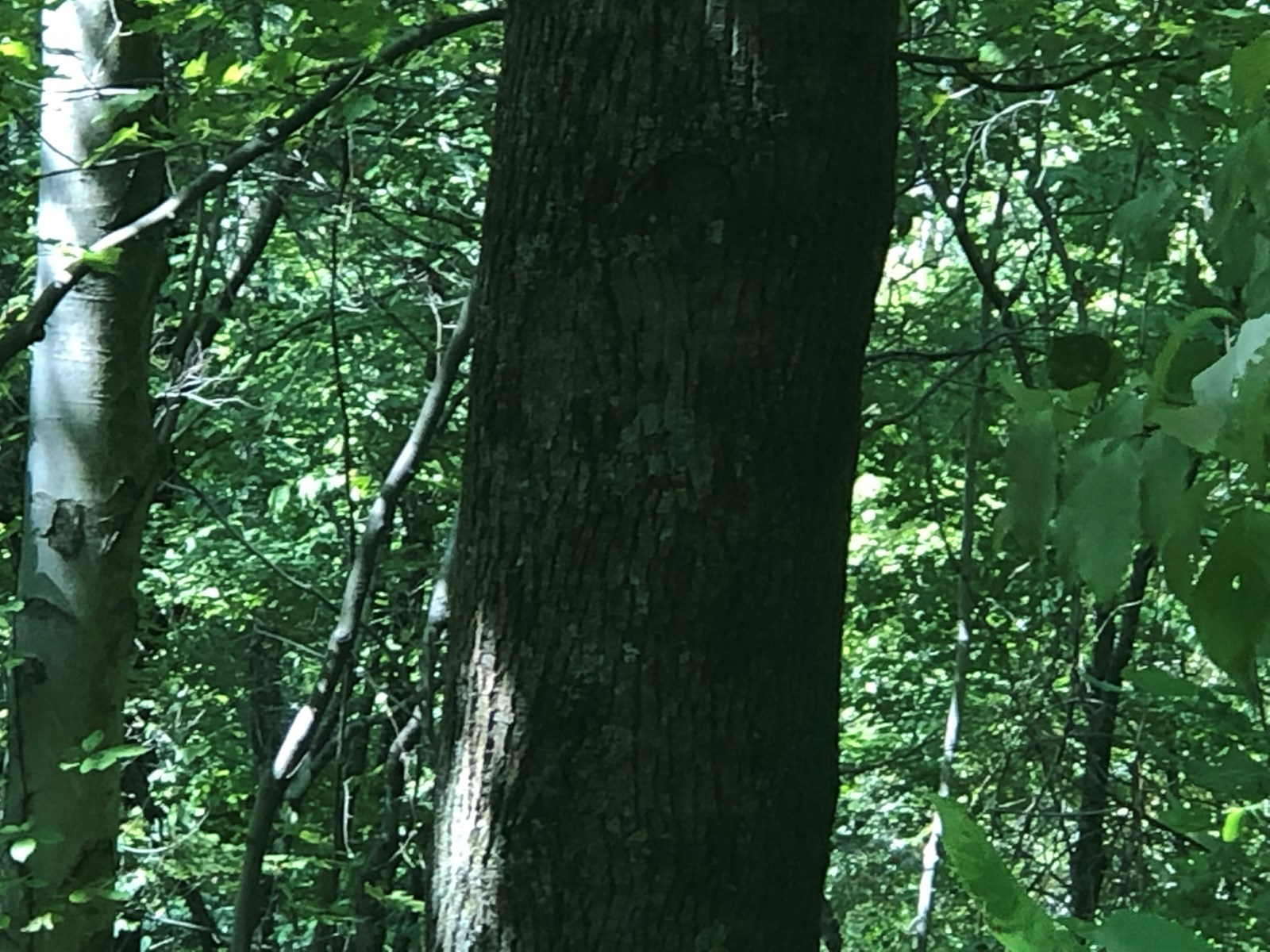 73 Acres Hunting Land