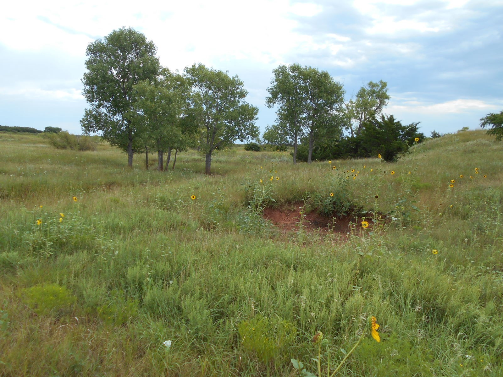 80 acres m/l WOODS COUNTY OKLAHOMA GRASSLAND For Sale