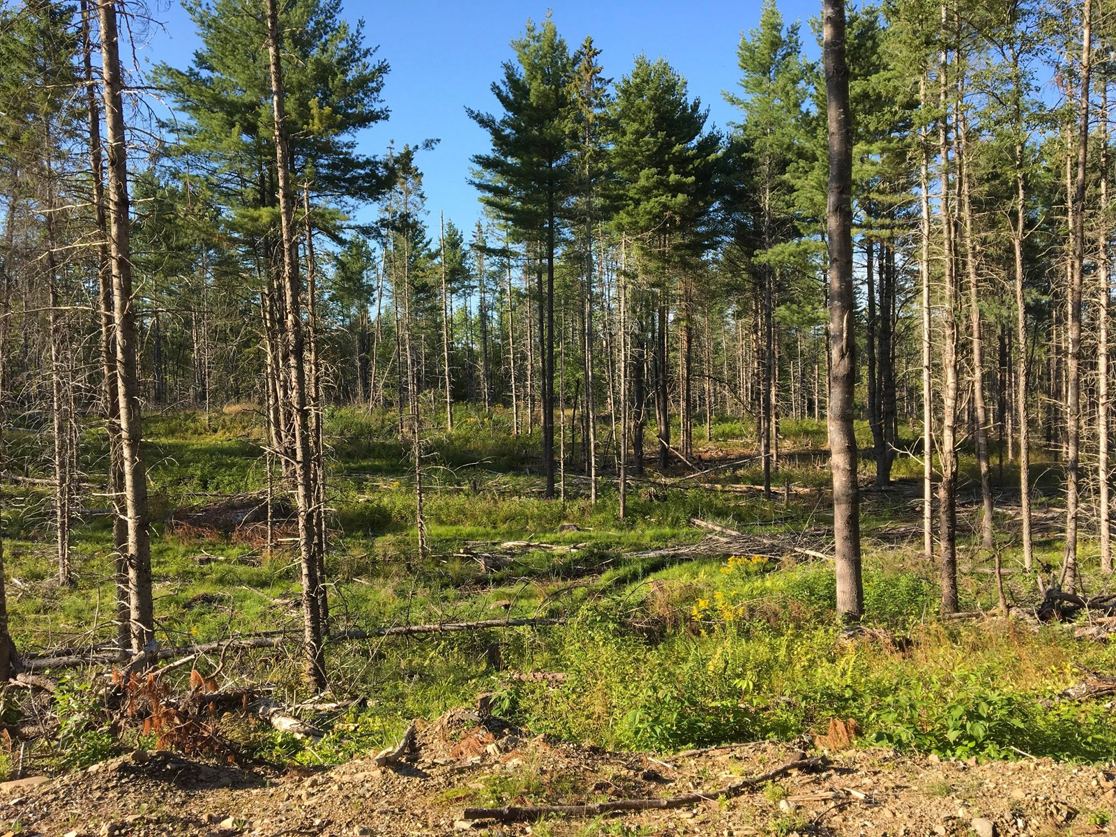 Recreational Timberland for sale in Exeter, Maine