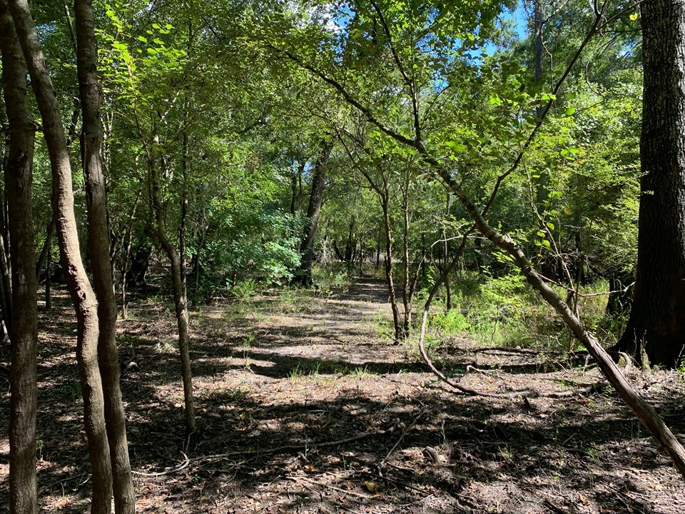 SUWANNEE RIVER WATERFRONT PROPERTY FOR SALE - BELL, FLORIDA