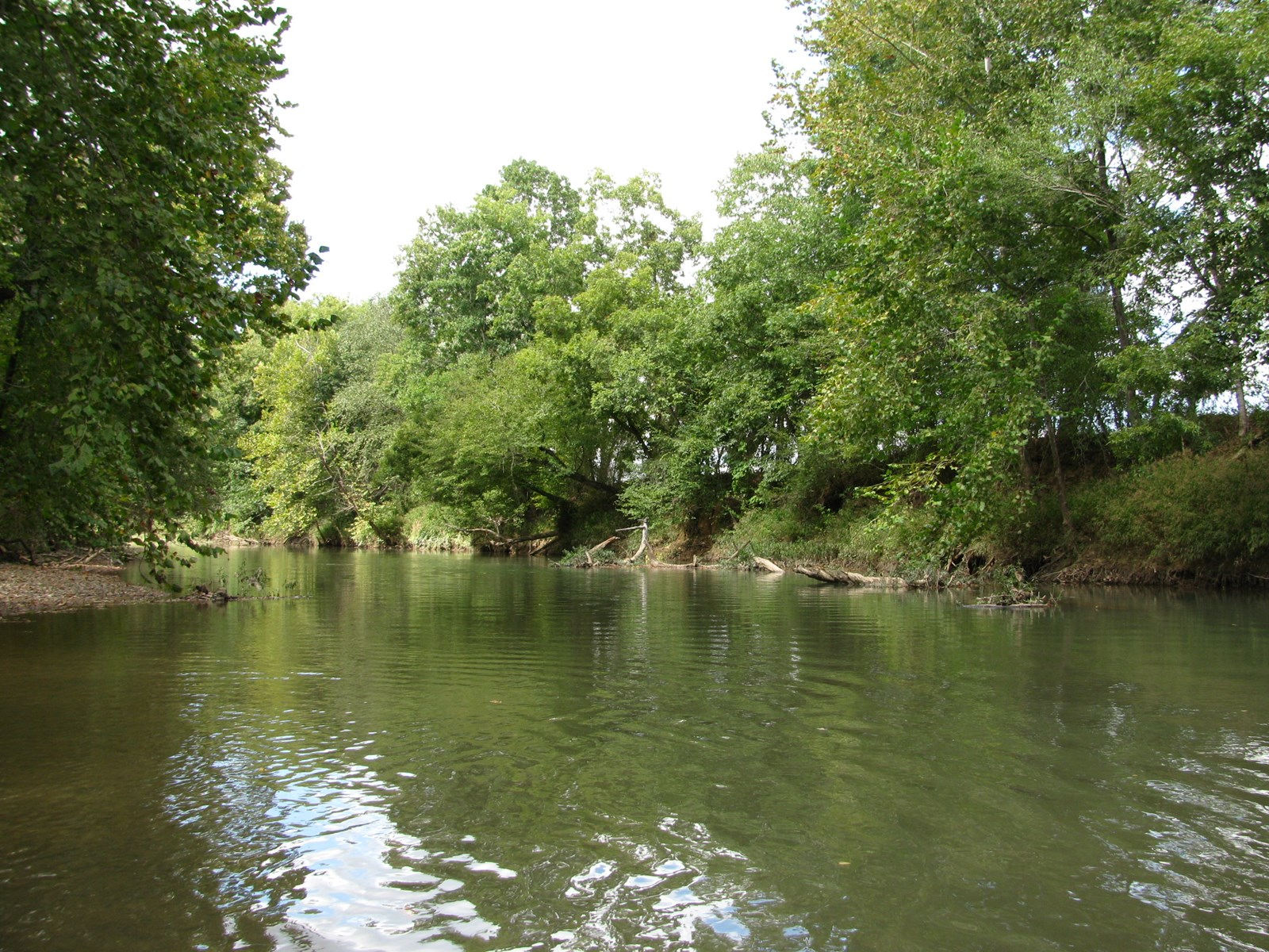 GORGEOUS CREEK FRONT LOT FOR SALE IN SAVANNAH, TN